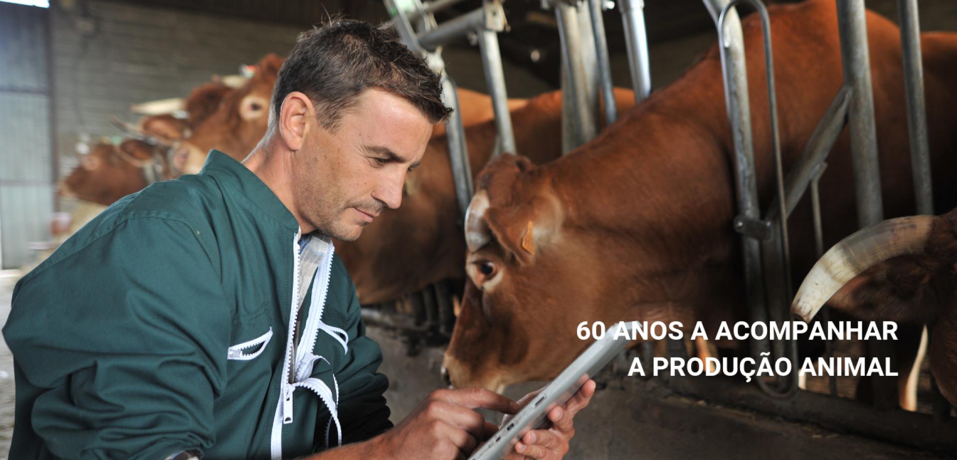 60 anos a acompanhar a produção animal