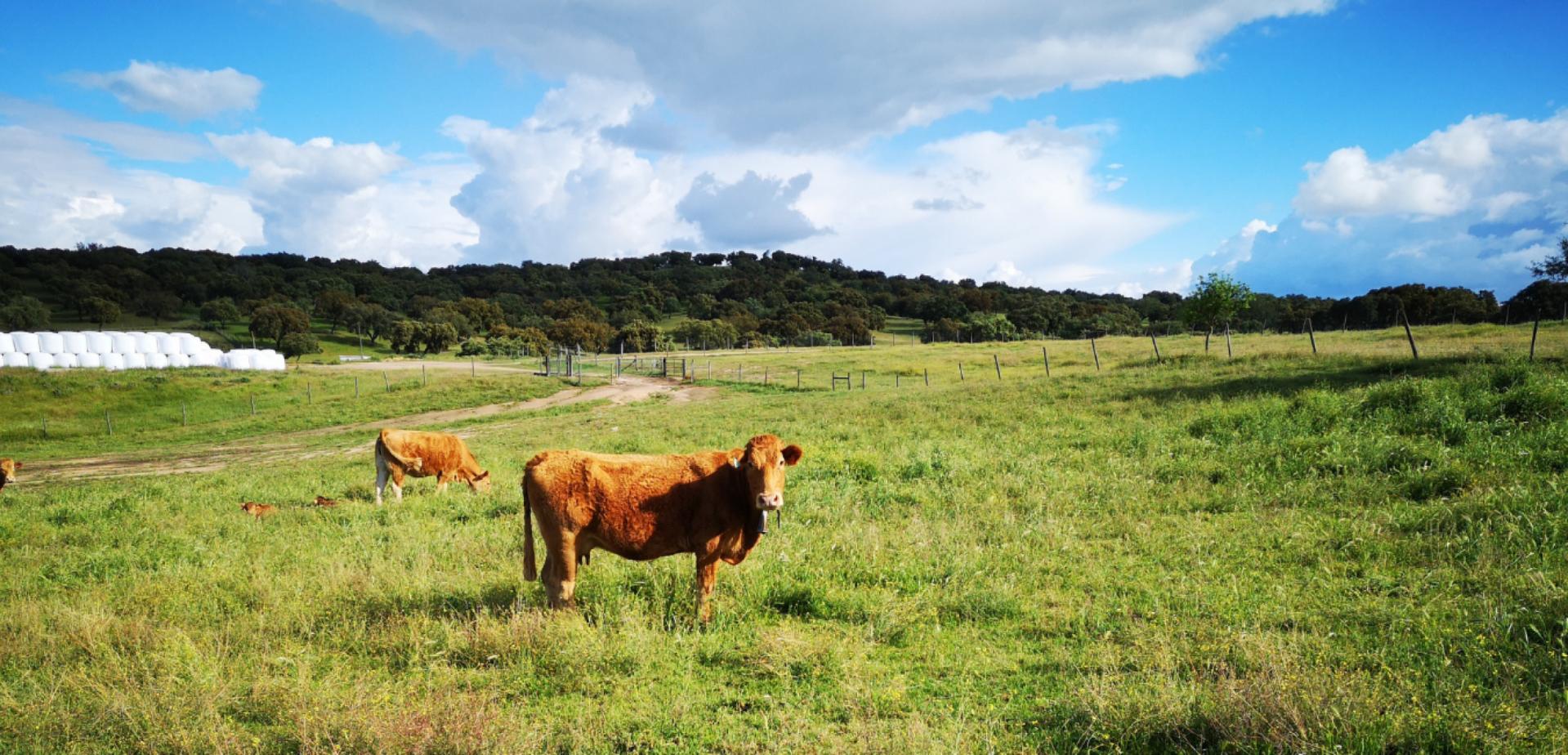 Vacas de Campo Program